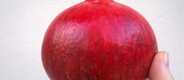 Melagrana rosso vermiglio per l'autunno
