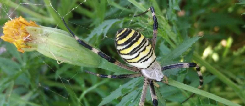 Il ragno che arriva a settembre